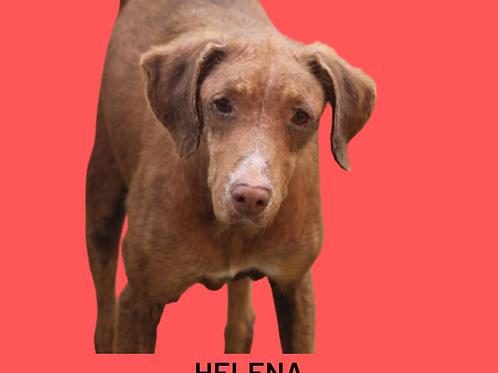 Helena-Sr. Claudio