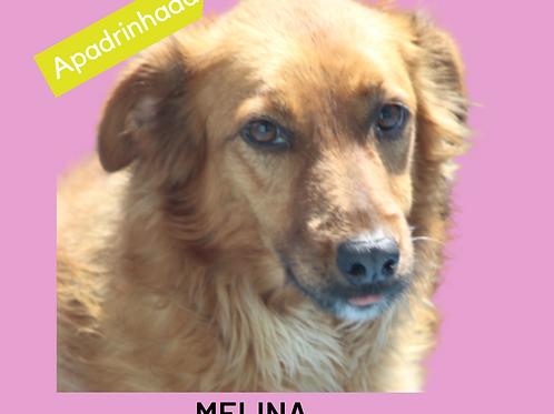 Melina-Sr. Claudio