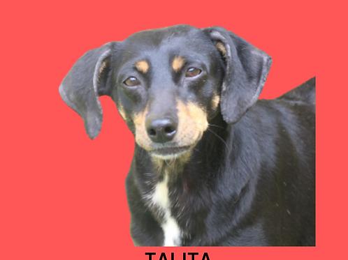 Talita-300 Anjos