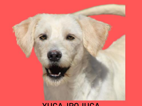 Yuca-ipojuca