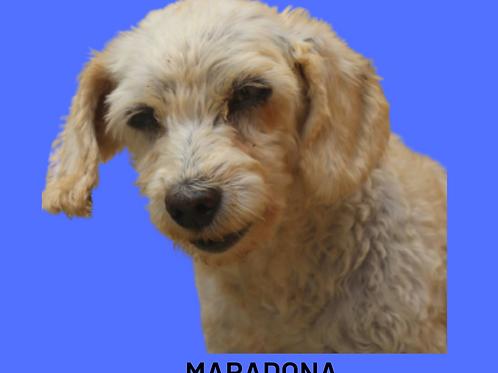 Maradona-parelheiros