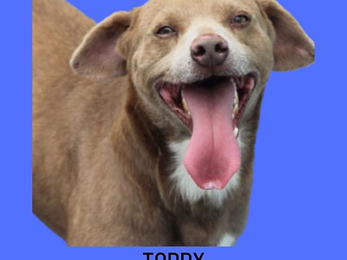 Toddy-nina