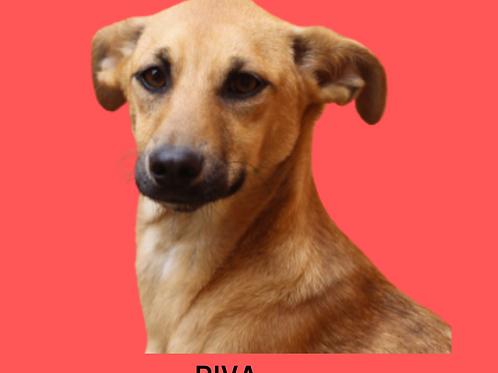 Diva-caucaia