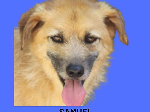 Samuel-Inês