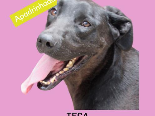 Teca-zoonose