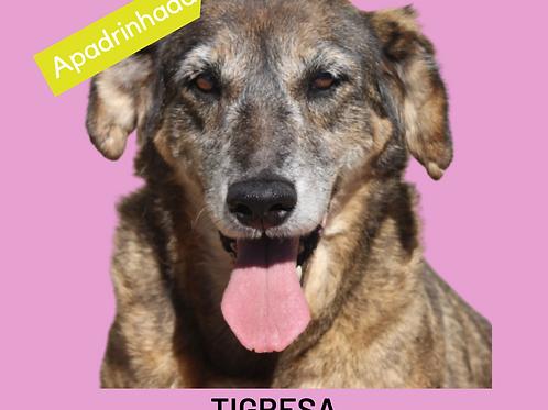 Tigresa-300 Anjos
