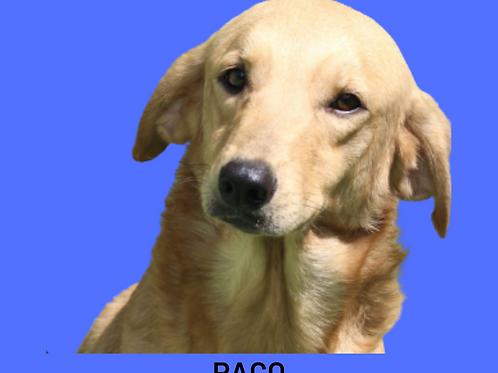 Paco-Sr. Claudio