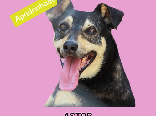 Astor-parelheiros