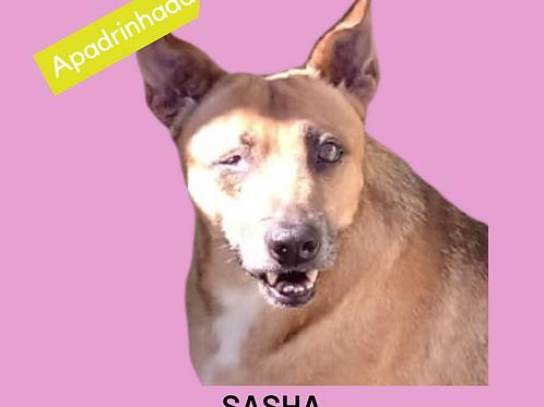 Sasha-sandra