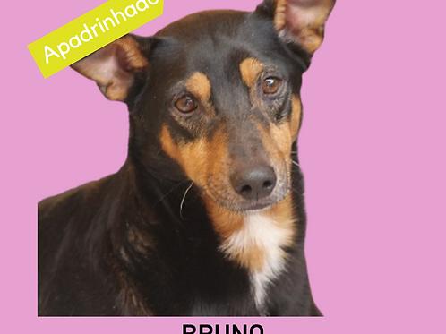 Bruno-paralheiros