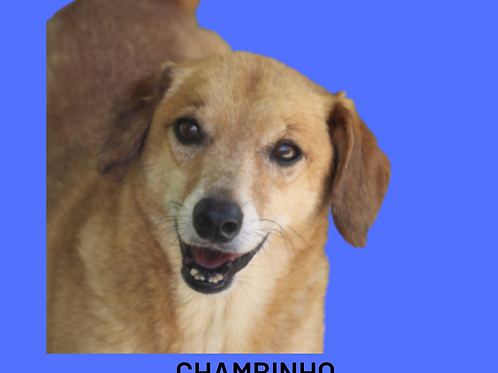 Chambinho-Sr. Claudio
