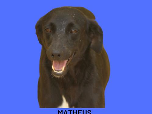 Matheus-brigitte