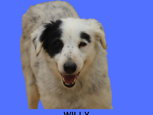 Willy-dolly