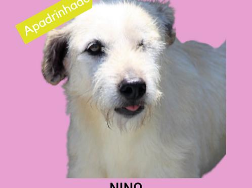 Nino-dv