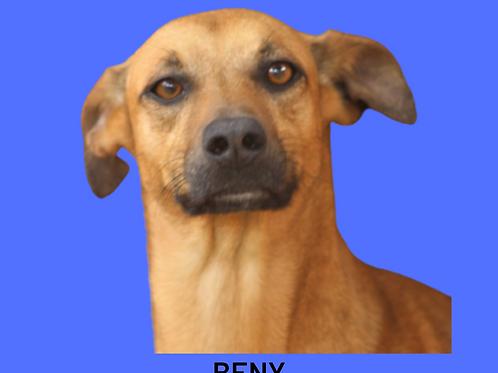 Beny-caucaia