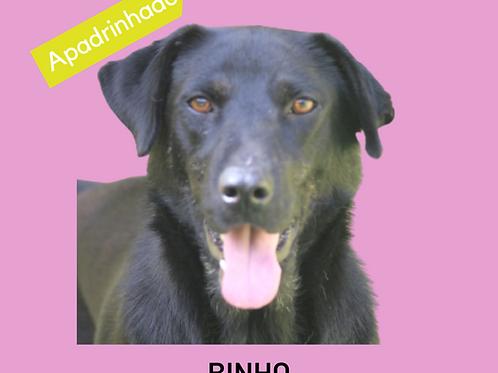 Binho-II-300 Anjos