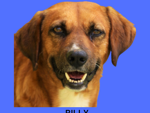 Billy-mel-pedreira