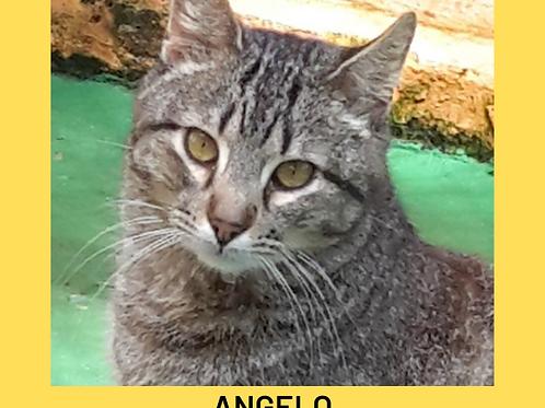 Angelo-gato