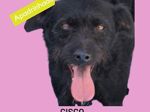 Cisco-parelheiros