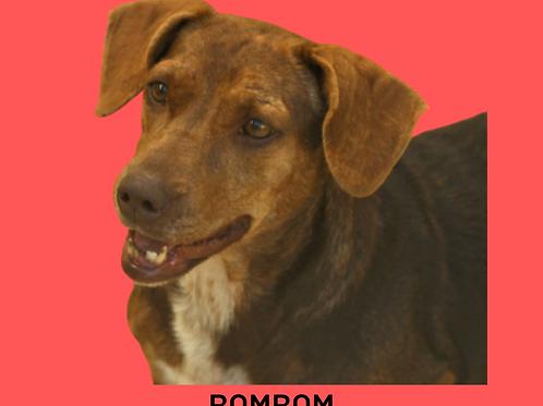 Bombom-embu