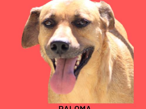 Paloma-douglas