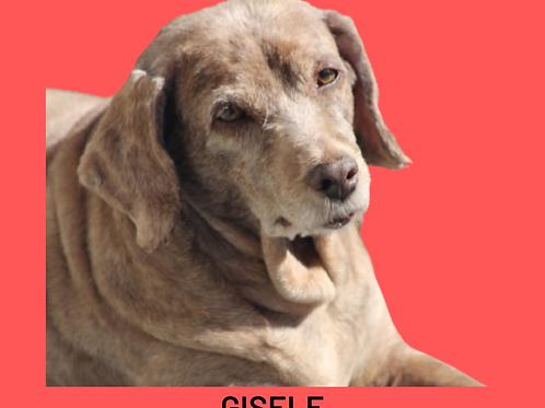 Gisele-pedreira