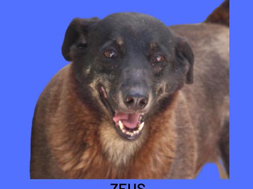 Zeus-cupecê
