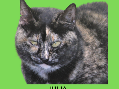 Julia-gata