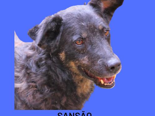 Sansão-parelheiros