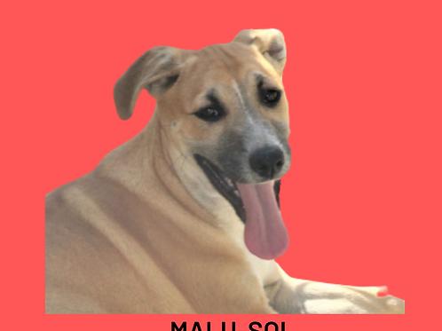 Malu-sol
