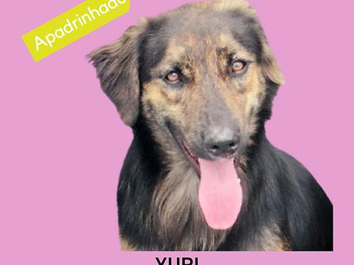 Yuri-vicky