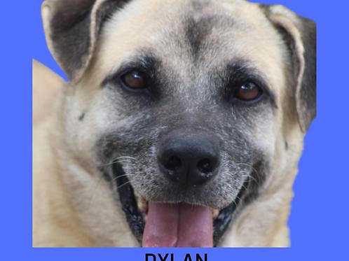 Dylan-300 Anjos