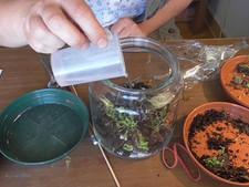 Experimente mit Pflanzen