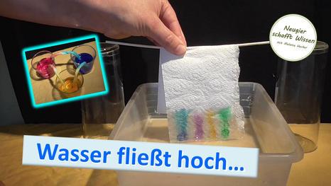Wasser fließt hoch! Experimente zu Adhäsion und kommunizierende Röhren für Kinder