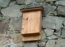 Fledermauskasten bauen