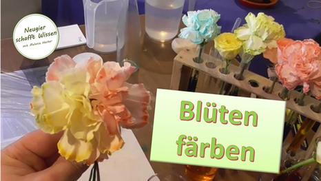 Blüten färben