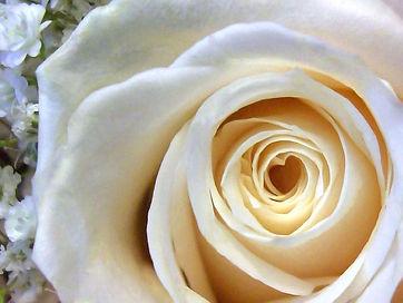 rose-blanche.jpg