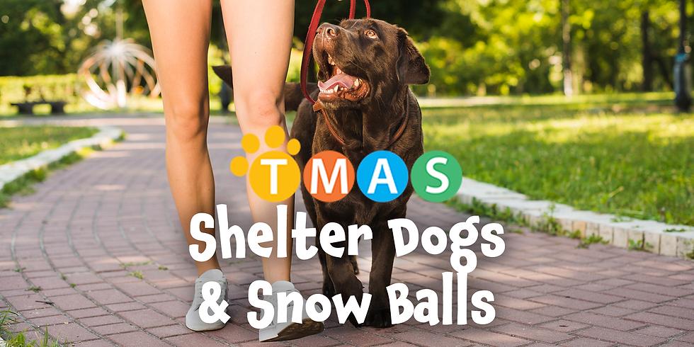 Shelter Dogs & Snow Balls