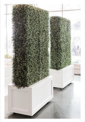 Boxwood Wall in Planter Box