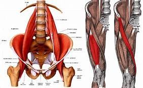 Hip Flexors.. Are Tight Hips Holding you back?