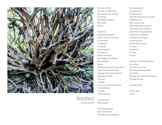 Rooted // Jay Griffith — Written works
