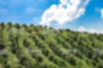 honduras 4.jpg