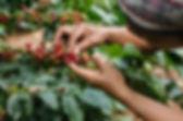 coffee farmer 01.jpg