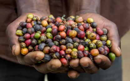 Uganda 02.PNG