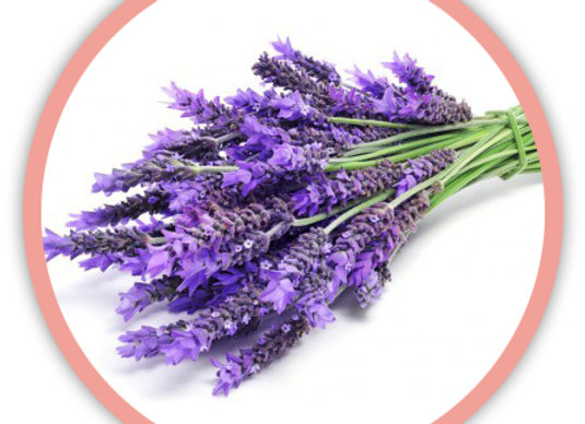 Parfum lavande Pour savon et cosmétique - SoapBox