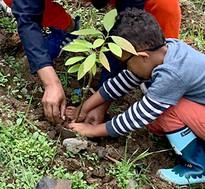 plantandoarvorelitoral.jpg
