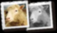 Revelado_ao_Mundo_o_1º_animal_clonado.pn