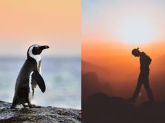 Pingüinos vs Emprendedor@s