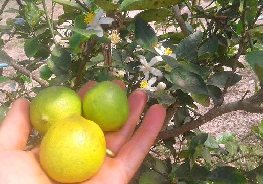 What are the best fruits to grow in Thailand?