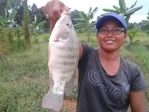 What is the best fish to grow in Thailand?